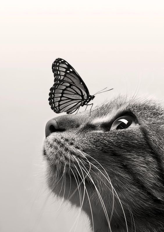 catandbutterfly